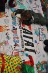 Детский праздник в Тойота Центр Волгоград 26