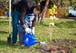 Посади дерево - спаси планету Волгоград Фото 42