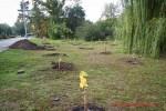 Посади дерево - спаси планету Волгоград Фото 56