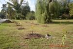 Посади дерево - спаси планету Волгоград Фото 58