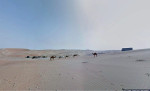 Google съемка пустыни верблюд Фото 03